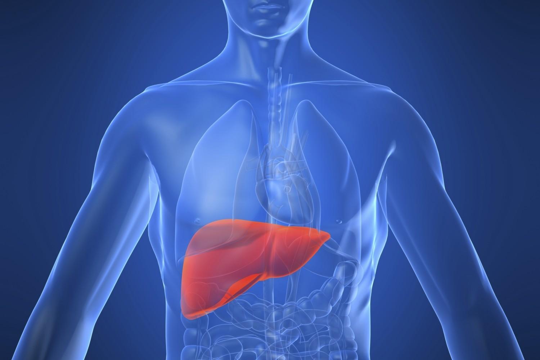 fegato grande
